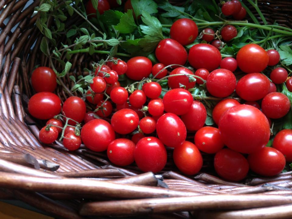 Garden fresh food at mandolin aegean bistro for Mandolin mediterranean kitchen